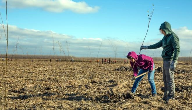 Foto: 10.000 de puieţi, plantaţi de voluntari în judeţul Constanţa