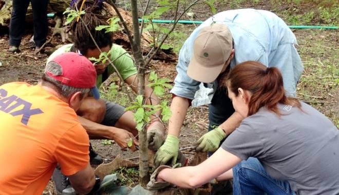 """Foto: """"Plantăm fapte bune"""", cea mai mare acţiune de împădurire din România"""