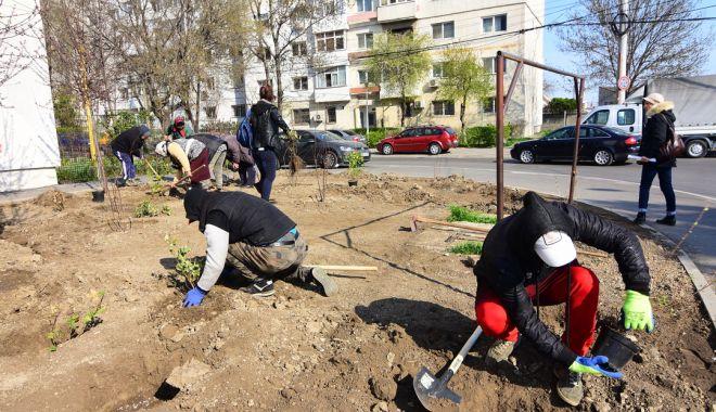 Foto: 243 de arbuști ornamentali vor înfrumuseța municipiul Constanța. Iată zonele
