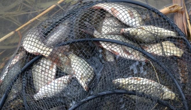 Foto: Kilometri de plase ilegale de pescuit, confiscate de Garda de Coastă