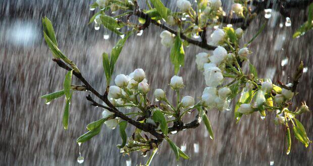 Foto: PROGNOZA METEO pe două săptămâni: Cum va fi vremea de Florii şi Paşte