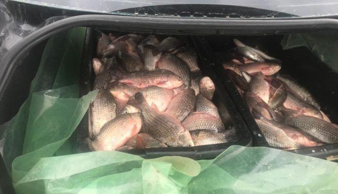 200 kg de pește confiscate de polițiștii de frontieră - politiadefrontiera-1555602846.jpg