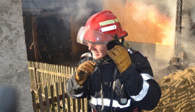 Foto: ARD ALBINE LA CONSTANŢA! Lichidarea focului, dificilă din cauza insectelor agitate