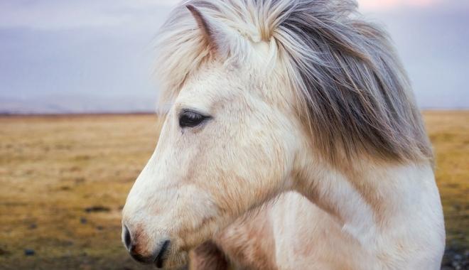 """Foto: Un minor a rămas fără ponei, după ce s-a gândit să intre în """"afaceri"""""""