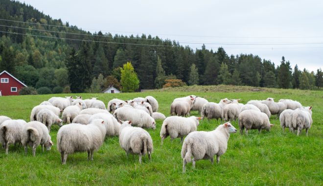 Popa şi ciobanul - popa-1627649100.jpg