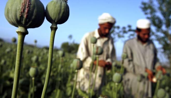 Foto: Ingredientul din care se produce heroina, din ce în ce mai cultivat