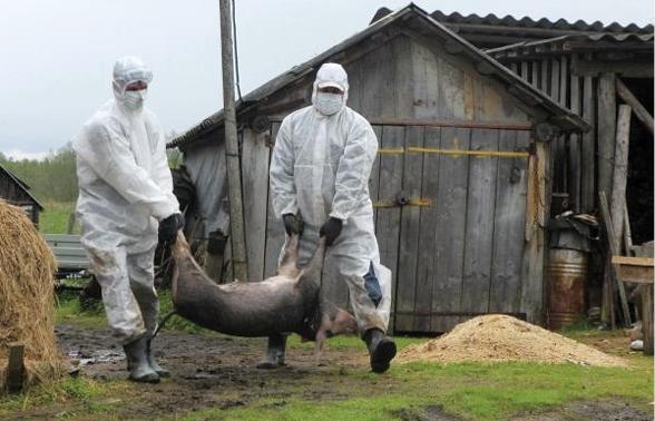 Foto: Viorica Dăncilă: Fermierii afectați de pesta porcină vor primi 43 de milioane de euro de la bugetul de stat și din fonduri europene
