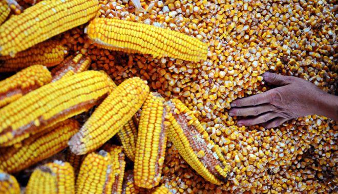 Foto: Poziția României în topul producțiilor agricole din Uniunea Europeană
