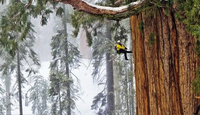 Foto: Foto/ Imagini incredibile cu cei mai mari copaci din lume