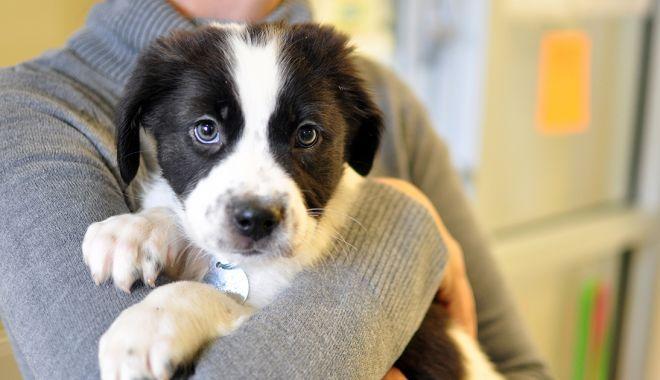 Foto: Primăria Constanța a dat startul campaniei de adopție a câinilor fără stăpân