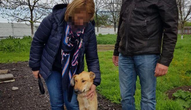 Foto: Primăria Constanța continuă campania de adopție a câinilor fără stăpâni
