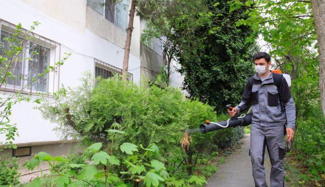 Foto: Primăria Constanța a dat startul dezinsecției spațiilor verzi din cartiere