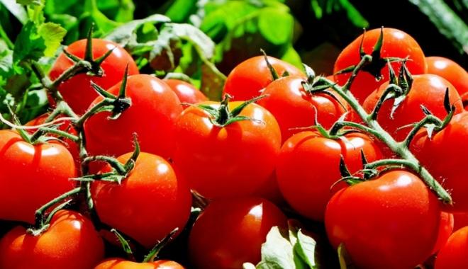 Foto: Primele roade ale programului de sprijin pentru tomatele româneşti