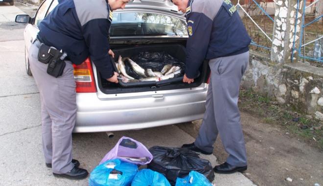 Foto: Prins de poliţişti cu peste  100 kg de peşte, în portbagajul unui Audi
