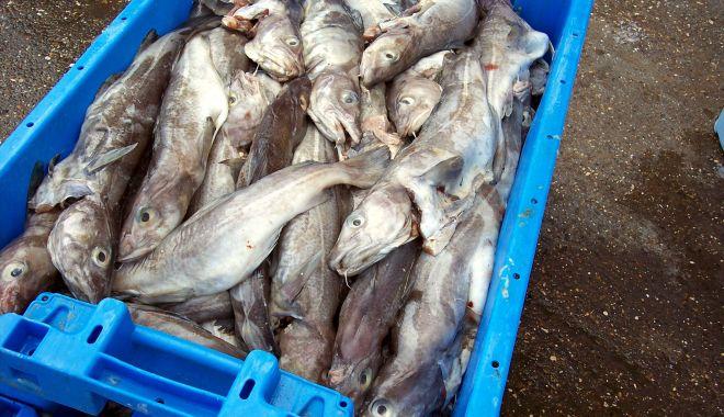 Foto: Prinşi cu peştele în sac