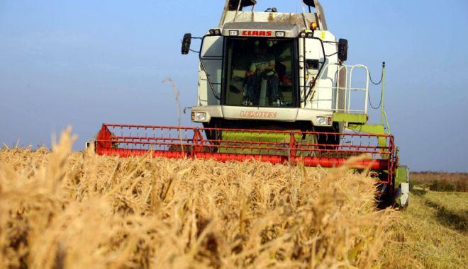 Foto: Producția agricolă vegetală din 2017 a crescut la toate culturile
