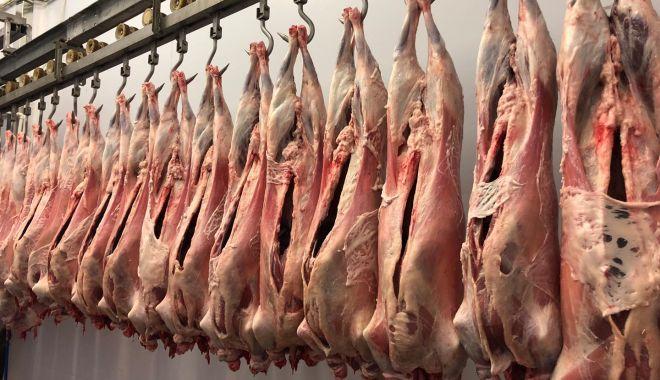 Foto: Producția de carne de oaie a explodat