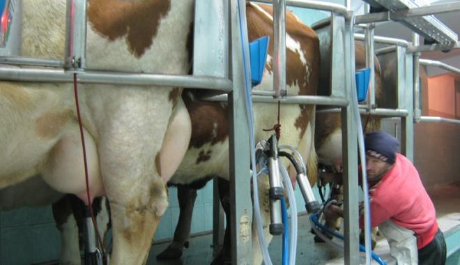 Foto: Importul de lapte creşte mai repede decât producţia internă