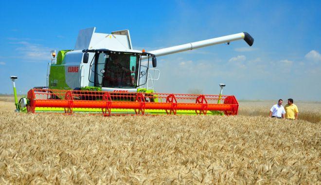 Foto: Producţie record de grâu! Constanţa, printre judeţele fruntaşe