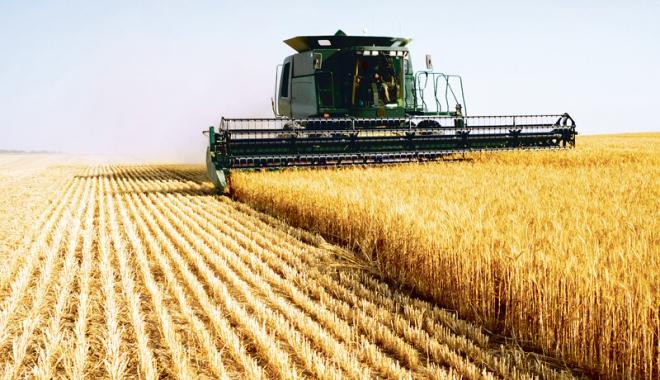 Foto: Producţii istorice! România a depăşit, anul acesta, 10 milioane de tone la producţia de grâu