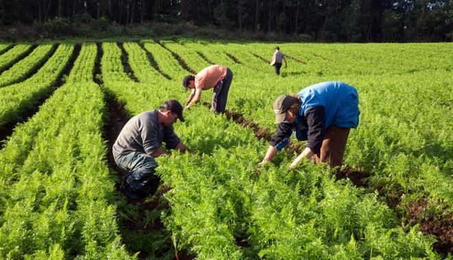 Foto: Cota TVA va scădea, în agricultură, de la 19% la 9% pentru încă opt lucrări şi servicii