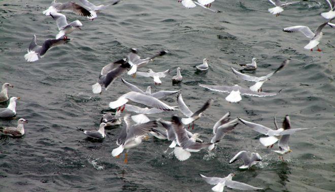 Foto: Conservarea ecosistemului marin devine absolut necesară