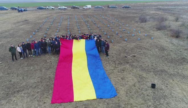 Foto: Tinerii din PSD Constanța au plantat 140 de copaci pentru a marca Ziua Dobrogei