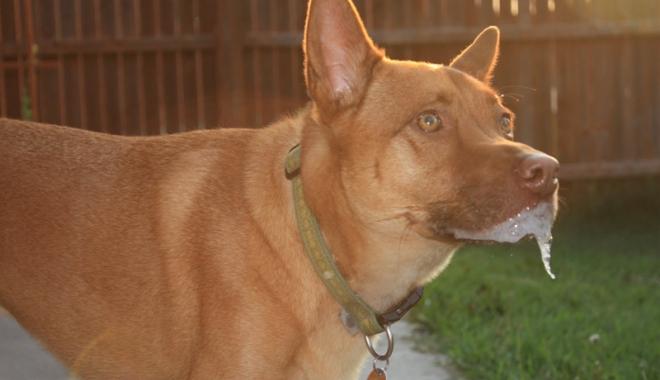 Foto: Aţi fost muşcat de un câine? Controlul  la medic, obligatoriu