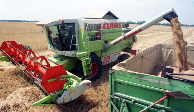 Foto: Producție record  la grâu, în acest an
