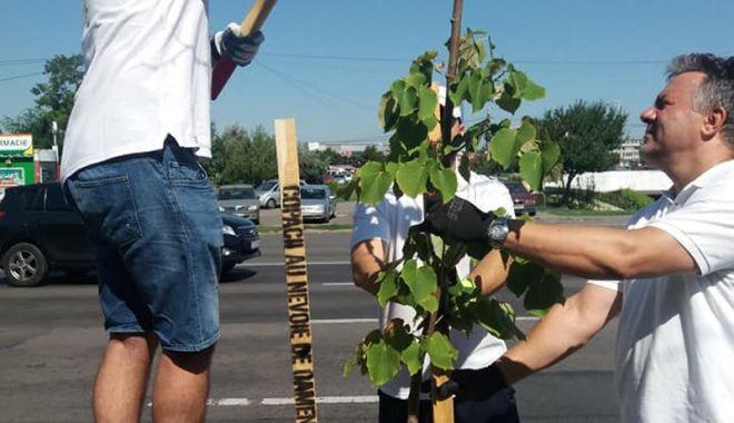Copacii din parcul de la Gară, îngrijiți  în cadrul campaniei