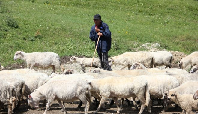 Foto: S-a înființat Asociația Profesională a Ciobanilor