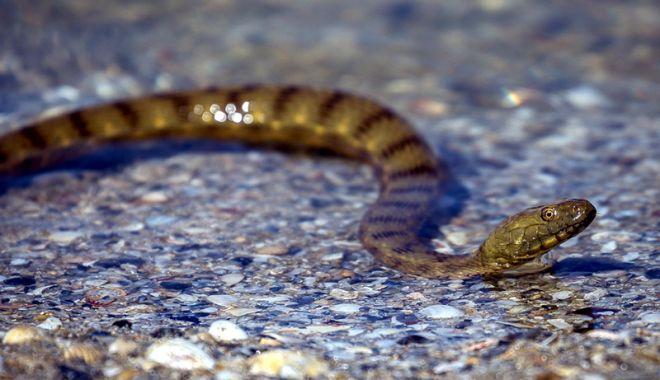 Foto: Alertă în Parcul Tăbăcăriei. Un şarpe a băgat spaimă în mămici şi copii