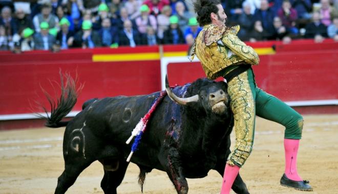 Foto: Scene de groază surprinse în timpul unei coride din Spania! Toreador sfârtecat de un taur