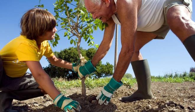 Foto: Se caută voluntari  pentru plantarea copacilor, la Constanţa
