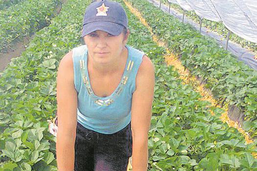 Foto: Joburi în străinătate. Se caută muncitori în agricultură