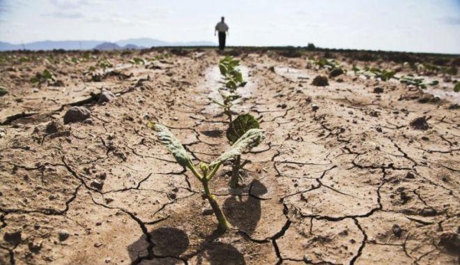 Culturile agricole din județul Constanța sunt cele mai afectate de secetă - seceta-1591355914.jpg