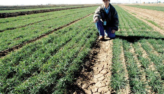 Foto: Seceta a afectat grav culturile de cereale! Recoltele din vară vor fi mai mici cu 50%