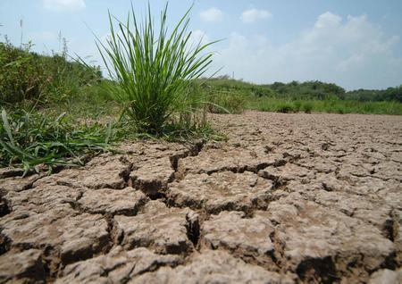 Foto: Seceta se menţine în sud - estul ţării, cel puţin până pe 14 august