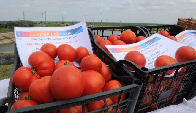 Foto: Se fac plățile pentru programul de tomate