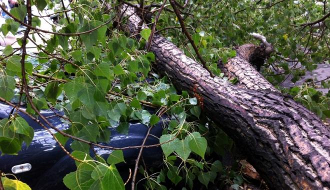 Foto: Şofer lovit de un copac căzut, la Corbu