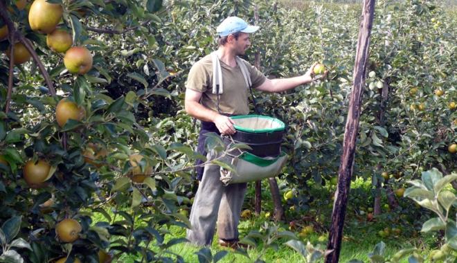 Foto: Spaniolii vor români care să culeagă și să le ambaleze fructele