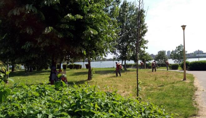 Foto: Primăria Constanţa se luptă cu căpuşele şi insectele din oraş şi din Mamaia