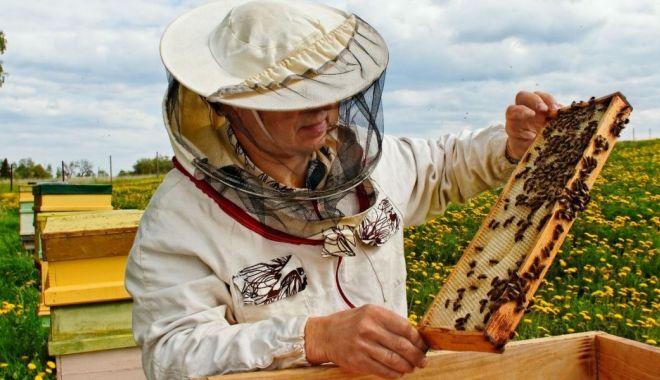 Foto: Măsuri de sprijin pentru apicultori. Care este cuantumul ajutorului