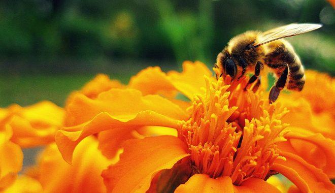 Foto: Au început plăţile pentru apicultori. Ce sumă a fost alocată