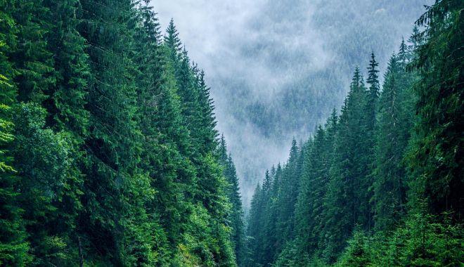 Suprafaţa împădurită a Europei a crescut - suprafataimpadurita-1616435935.jpg
