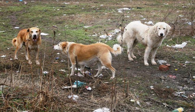 """Haite de câini, """"de pază"""" pe plaja Mamaia. """"Pun în pericol viaţa trecătorilor!"""" - sus-1612292487.jpg"""