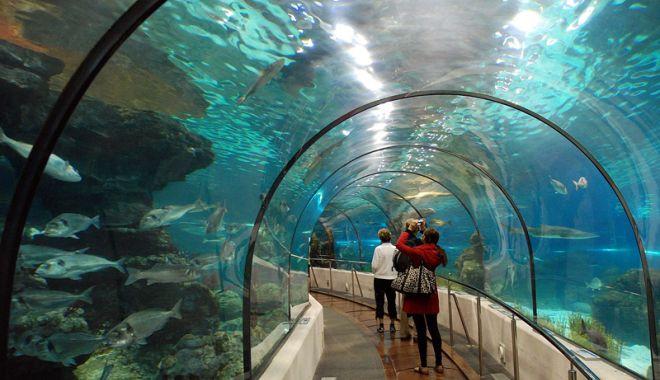 Foto: Stadion nou, centru de convenţii şi expoziţii,  acvariu mai mare şi aquapark de iarnă, la Constanţa