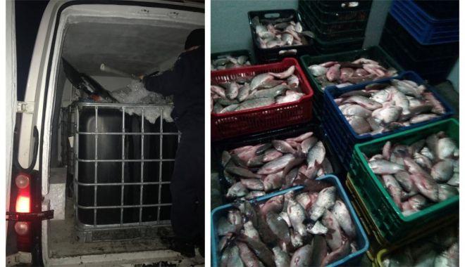 Foto: Sute de kilograme de peşte fără documente legale, confiscate de poliţiştii de frontieră