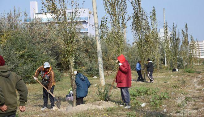 """Foto: Mii de flori plantate în campania """"Curăţăm  Constanţa noastră"""""""