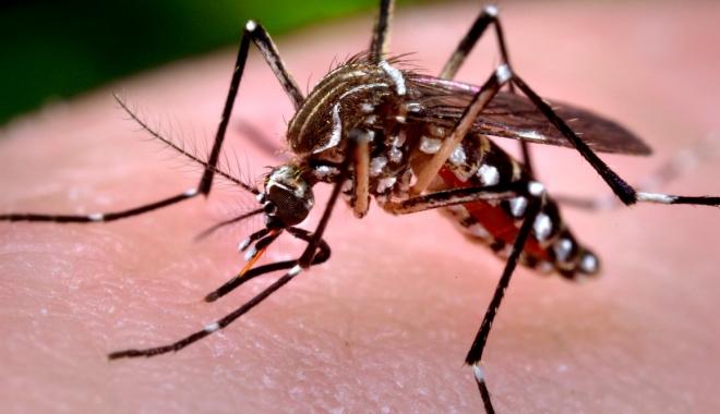 Foto: VIRUSUL ZIKA / Ţânţari purtători ai unei bacterii au fost lansaţi pentru a combate virusul